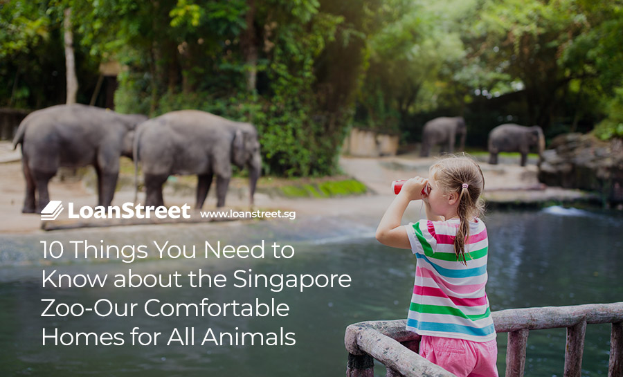 10-Things-You-Need-to-Know-about-the-Singapore-Zoo-Our-Comfortable-Homes-for-All-Animals